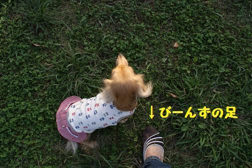 DSC01746-1.jpg